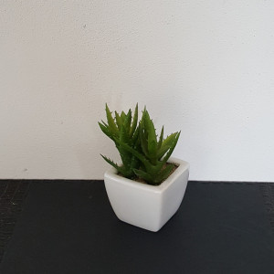 Aloe small in vaso ceramica 3 piante per vaso