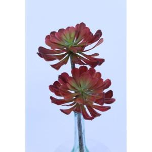 Succulent cm.50 rosso