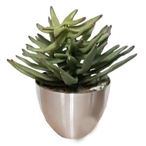 Succulent in vaso alluminio