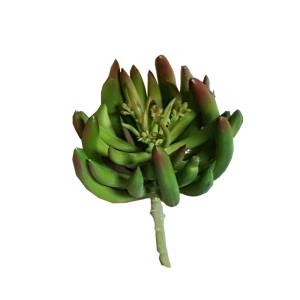 Succulent con infiorescenza h. 16 cm. verde