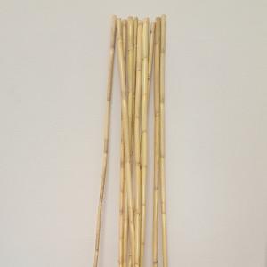Bamboo canna cm. 100