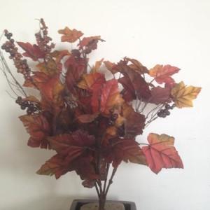 Vite bush con bacche burgundy