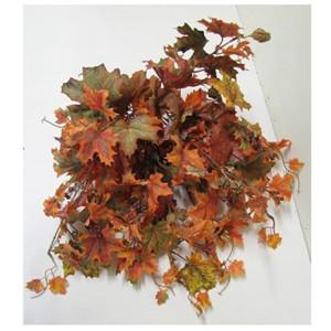 Acero canadese bush