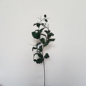 Agrifoglio ramo