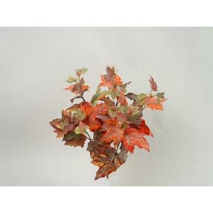 Acero bush autumn