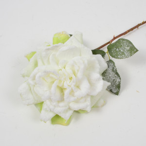162 - Rosa innevata cm.57