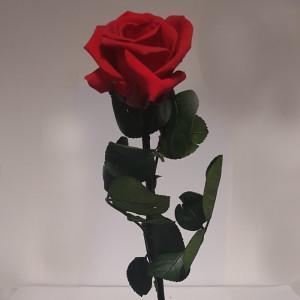 Rosa preservata Amorosa mini c/stelo