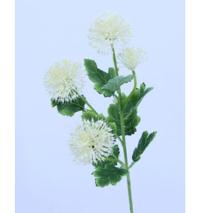 Allium ramo cream