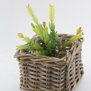 Succulent cm.32 verde
