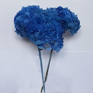 Ortesnia preservata azzurro
