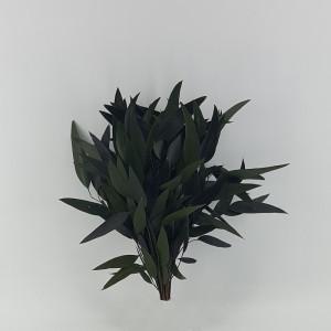 Eucaliptus willow preservato verde (gr.50)