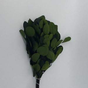 Eucaliptus populus cm.45 verde (gr.150)