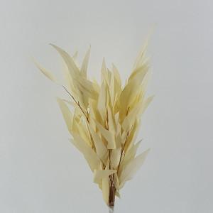 Eucaliptus willow preservato bianco (gr.50)