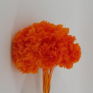 Ortensia preservata arancio