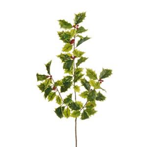 Agrifoglio ramo cm.54 variegato