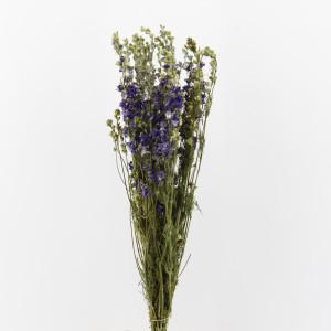 fiori secchi all'ingrosso
