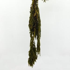 Amaranthus caudatus verde (gr.150)