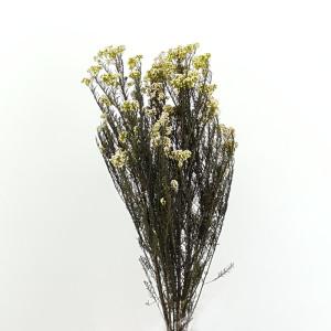Hely diosmii bianco (gr.125)