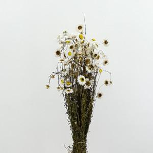 Acroclineum mazzo bianco (gr.50)