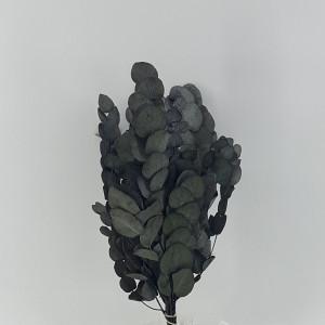 Eucaliptus spiral preservato verde (gr.100)