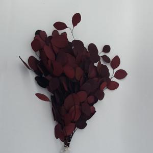 Eucaliptus populus cm.45 rosso (gr.150)