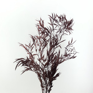 Eucaliptus niccoly cm.78 rosso (gr.150)
