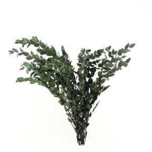 Eucaliptus parvifolia cm.78 verde (gr.150)